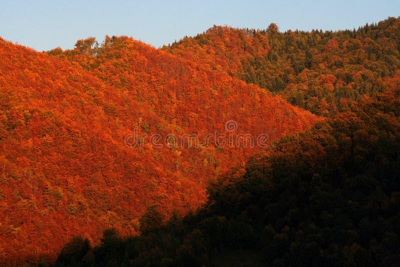 Bosque en otoño, Polonia fotografía de archivo