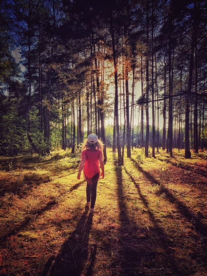 Bosque en Polonia fotos de archivo