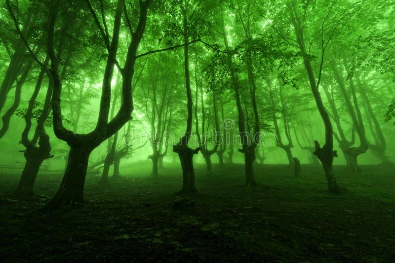 Bosque en primavera con niebla verde imágenes de archivo libres de regalías