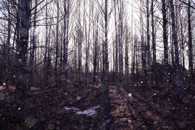 Bosque en primavera temprana fotos de archivo