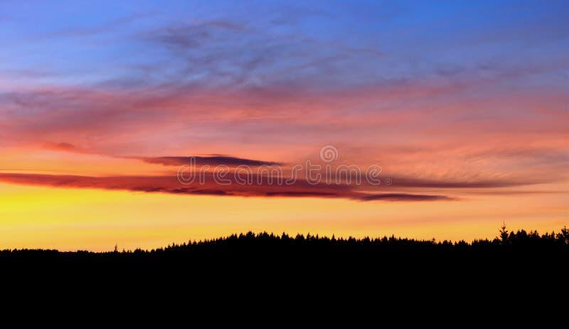 Bosque en puesta del sol imagen de archivo libre de regalías