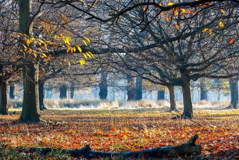 Bosque en Richmond Park imagenes de archivo