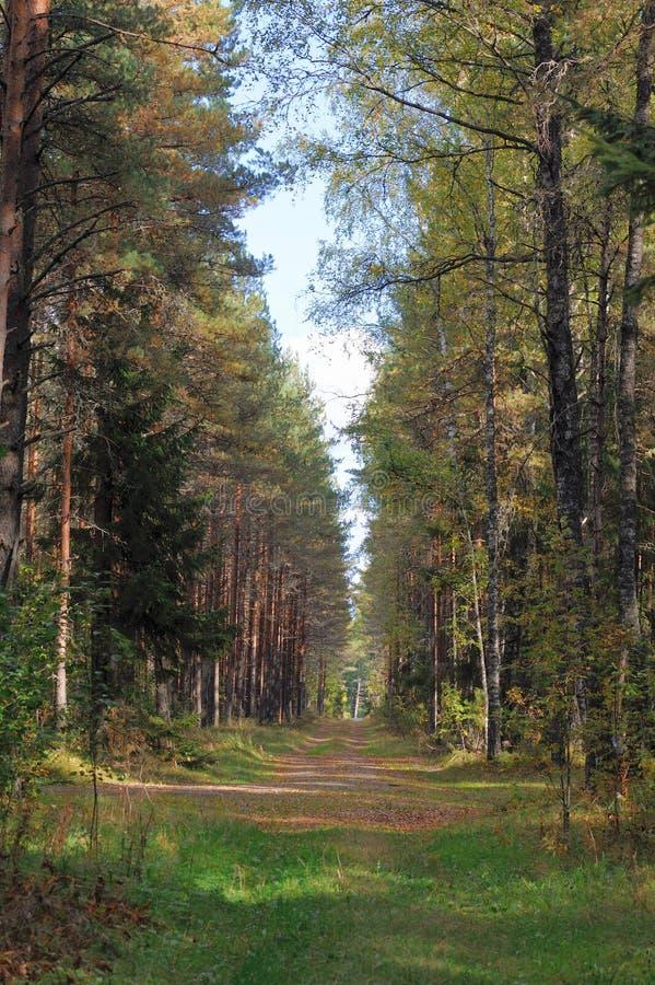 Bosque en septiembre fotografía de archivo libre de regalías