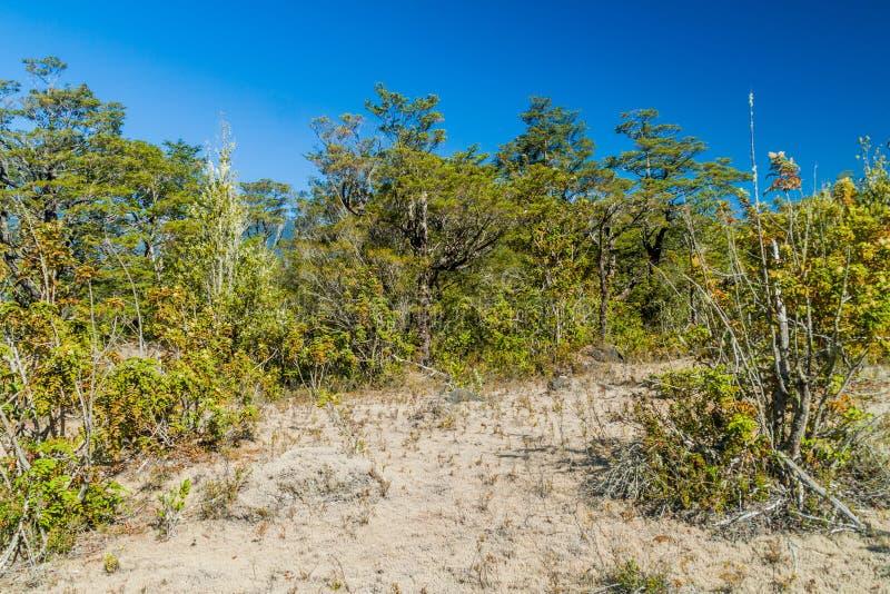 Bosque en Vicente Perez Rosales National Park, ji fotos de archivo