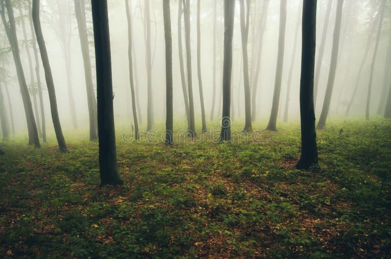 Bosque encantado con niebla y luz misteriosa después de la lluvia foto de archivo