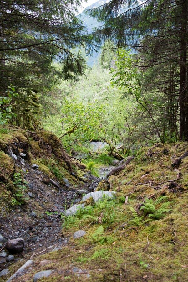 Bosque encantado en Alaska fotos de archivo