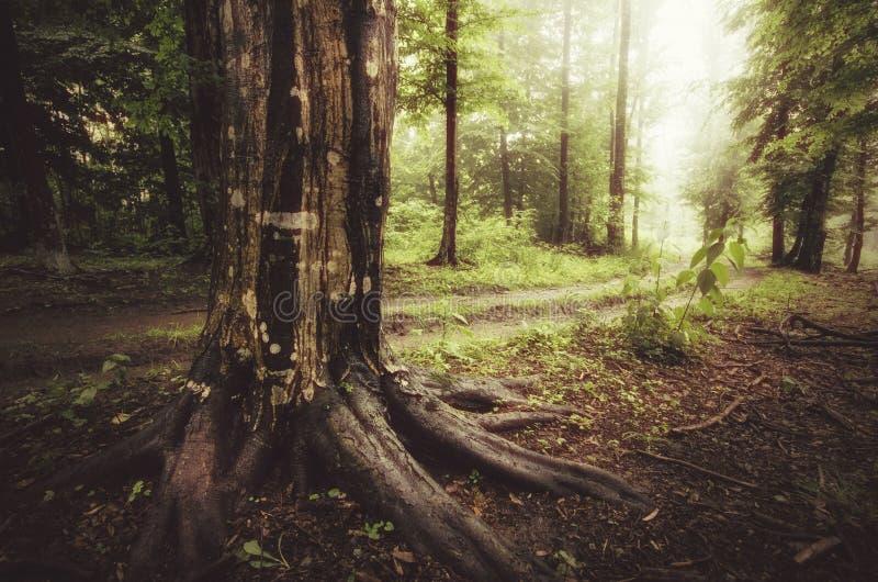 Bosque encantado en verano después de la lluvia imagen de archivo libre de regalías
