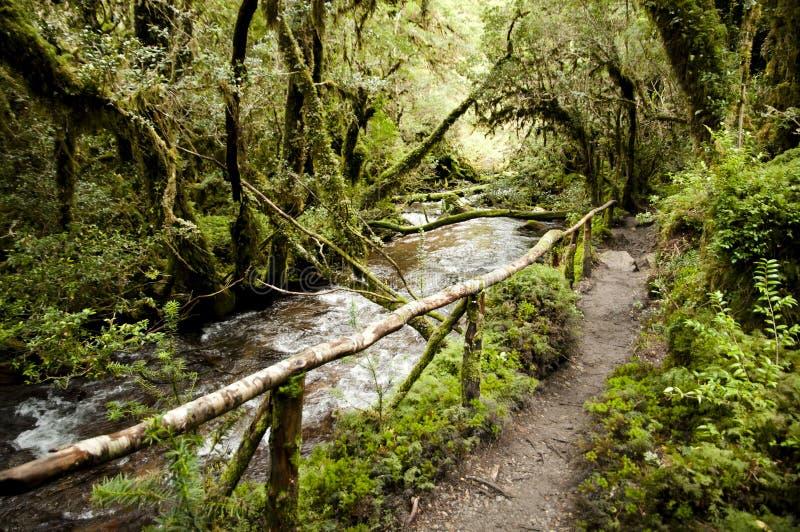 Bosque encantado parque nacional de queulat chile foto - El arbol encantado ...