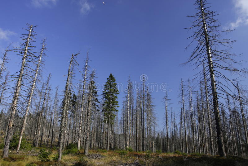 Bosque enfermo imagen de archivo