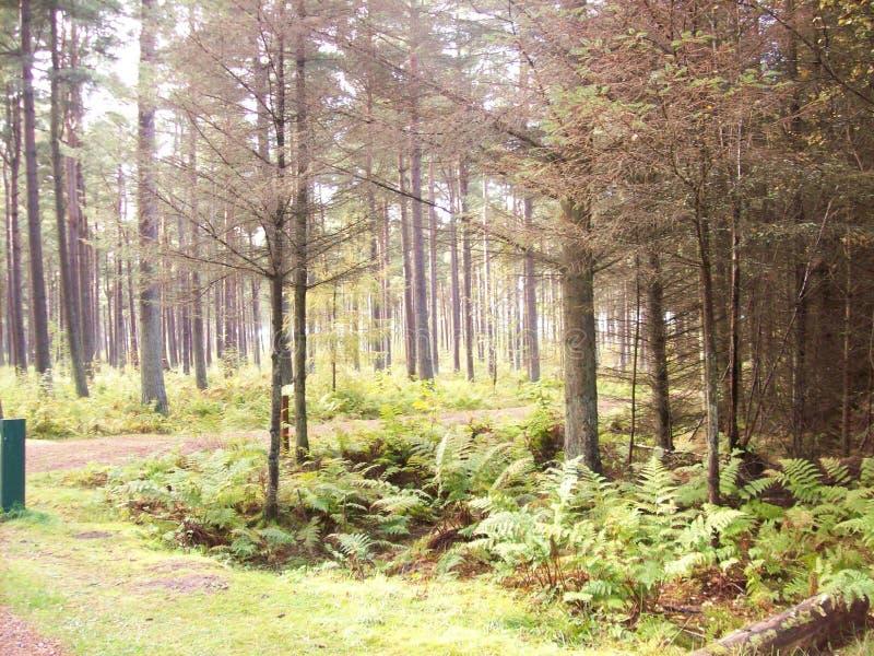 Bosque escocés imagen de archivo libre de regalías