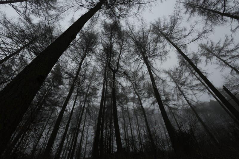 Bosque espeluznante imagenes de archivo