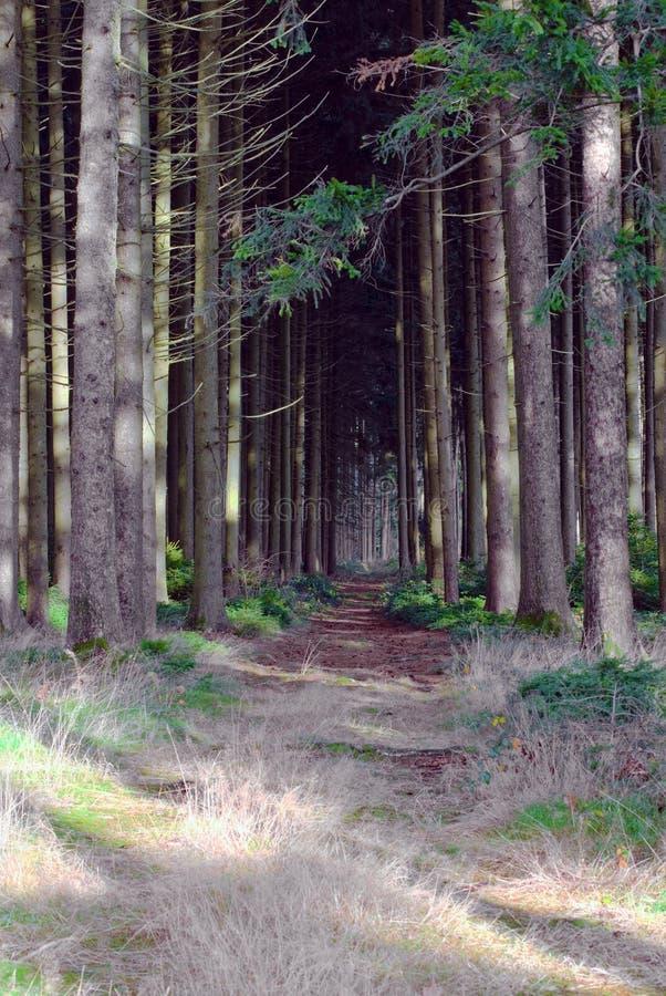 Bosque espeluznante fotos de archivo