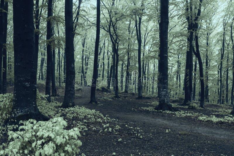 Bosque espeluznante fotografía de archivo