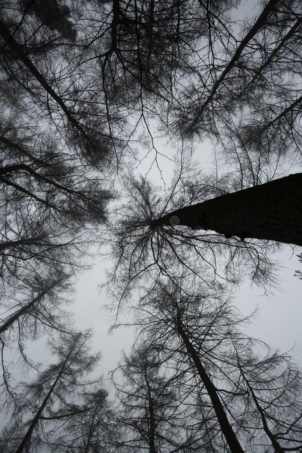 Bosque espeluznante II imagenes de archivo