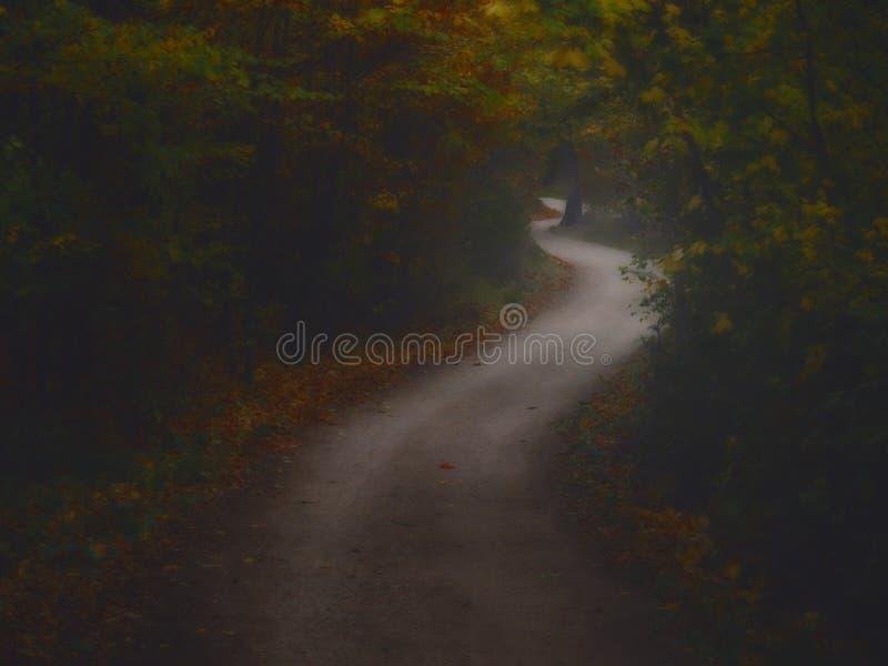 Bosque espeluznante oscuro con el camino formado curva doble imagen de archivo libre de regalías