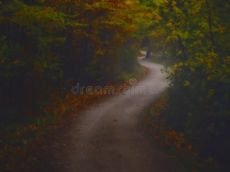 Bosque espeluznante oscuro con el camino formado curva doble imagen de archivo