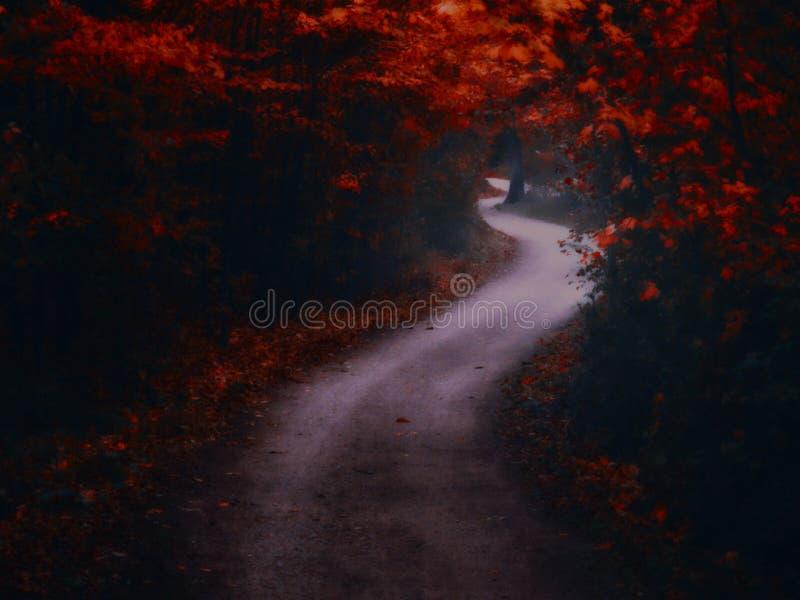 Bosque espeluznante oscuro con el camino formado curva doble fotografía de archivo