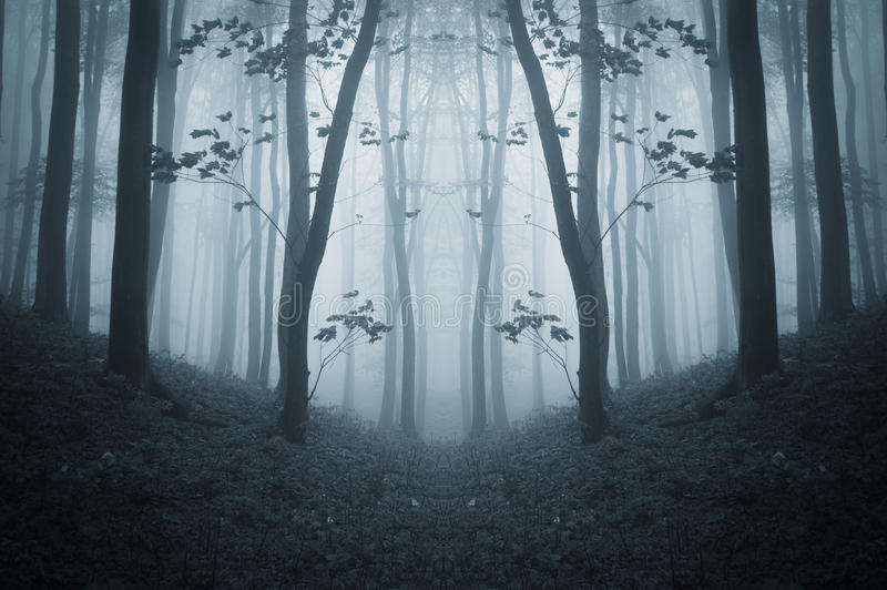 Bosque espeluznante simétrico oscuro con niebla en último otoño fotografía de archivo libre de regalías