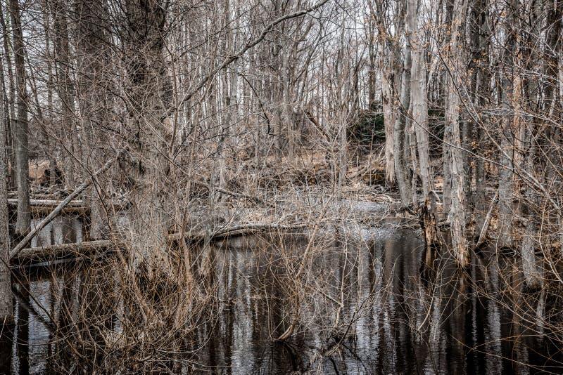 Bosque estéril espeluznante del pantano fotografía de archivo