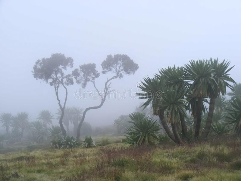 Bosque etíope en niebla imagenes de archivo