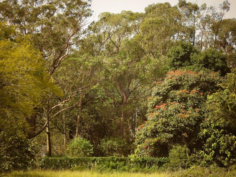 Bosque exclusivo en donde trabajo foto de archivo