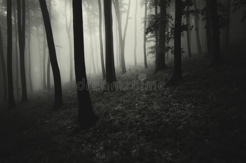 Bosque fantasmagórico espeluznante oscuro con niebla imágenes de archivo libres de regalías