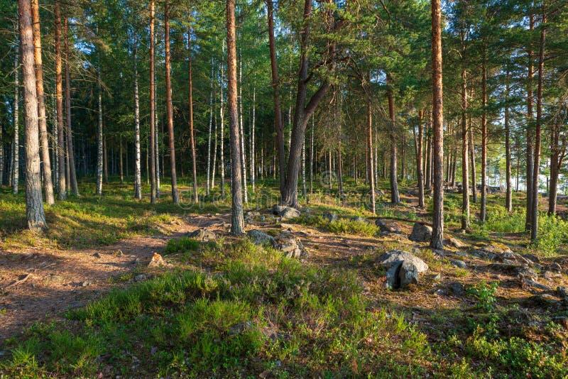 Bosque finlandés hermoso en el paisaje de la luz de la salida del sol fotografía de archivo libre de regalías