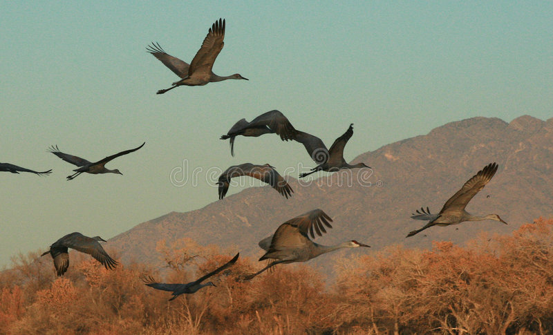 Download Bosque Flight stock image. Image of wings, migration, fall - 1707411