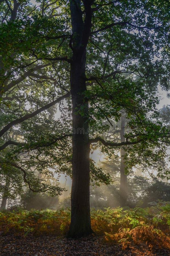 Bosque fresco fotografía de archivo libre de regalías