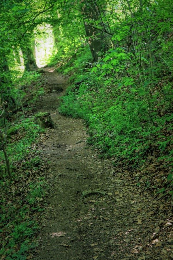 Bosque fresco y verde en la primavera, Alemania imagenes de archivo