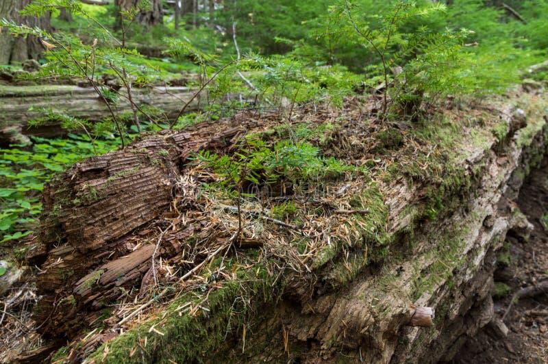 Bosque futuro fotos de archivo libres de regalías