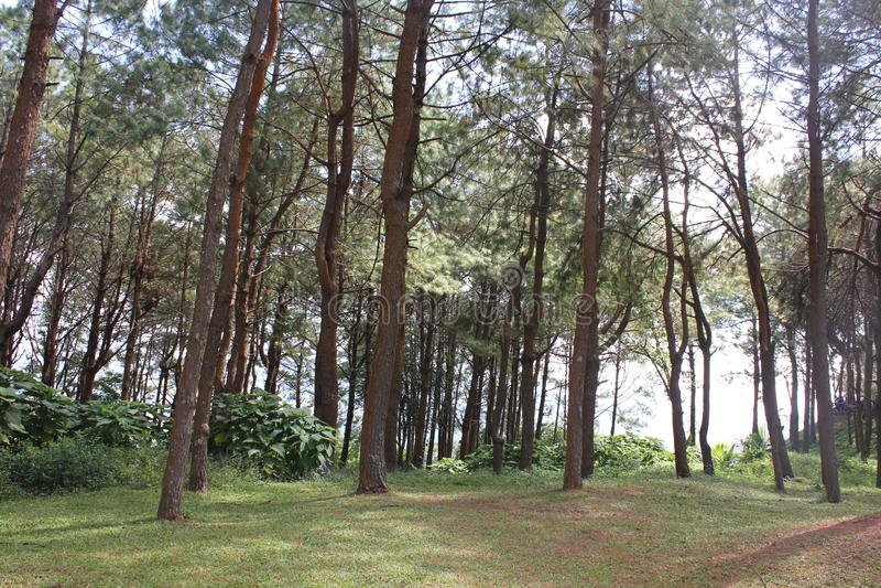 Bosque grande fotos de archivo