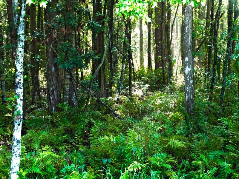 Bosque HDR horizontal