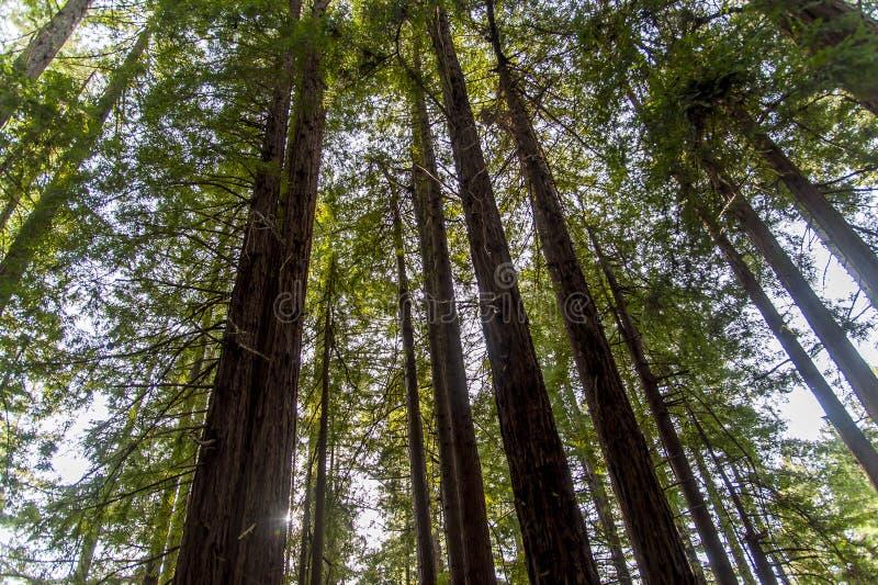 Bosque hermoso fotografía de archivo