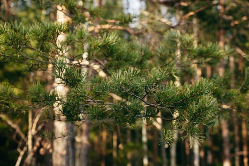 Bosque hermoso de la primavera en Cárpatos imagenes de archivo