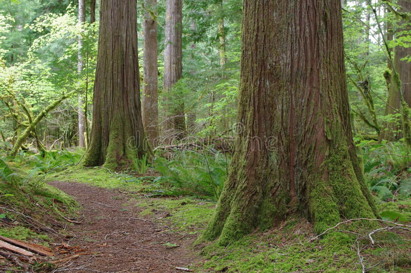 Bosque hermoso del noroeste pacífico imágenes de archivo libres de regalías