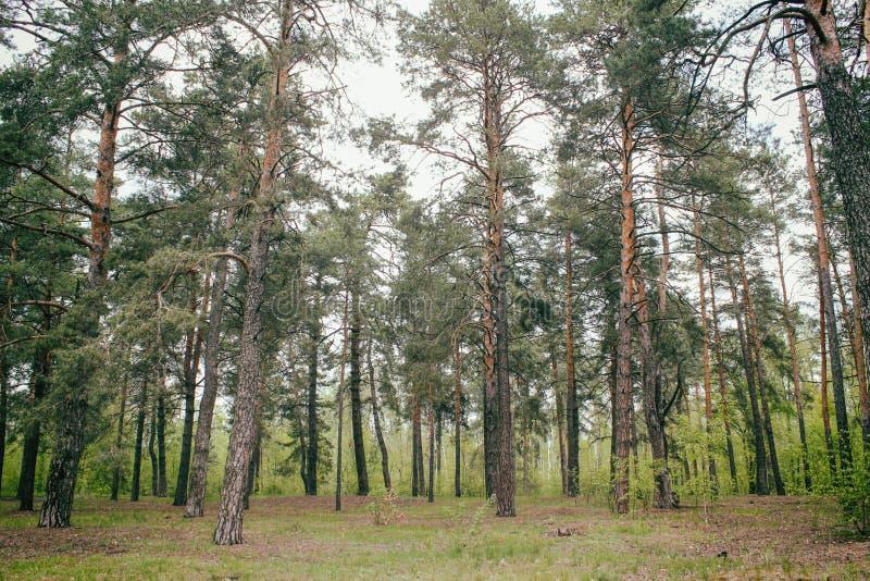 Bosque hermoso del verano con diversos ?rboles imágenes de archivo libres de regalías