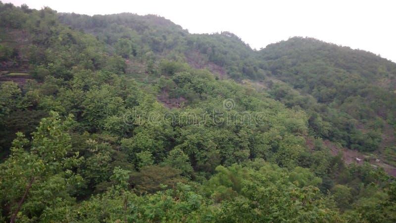 Bosque hermoso en Gunungkidul imagen de archivo