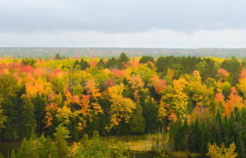 Bosque hermoso en otoño fotos de archivo libres de regalías