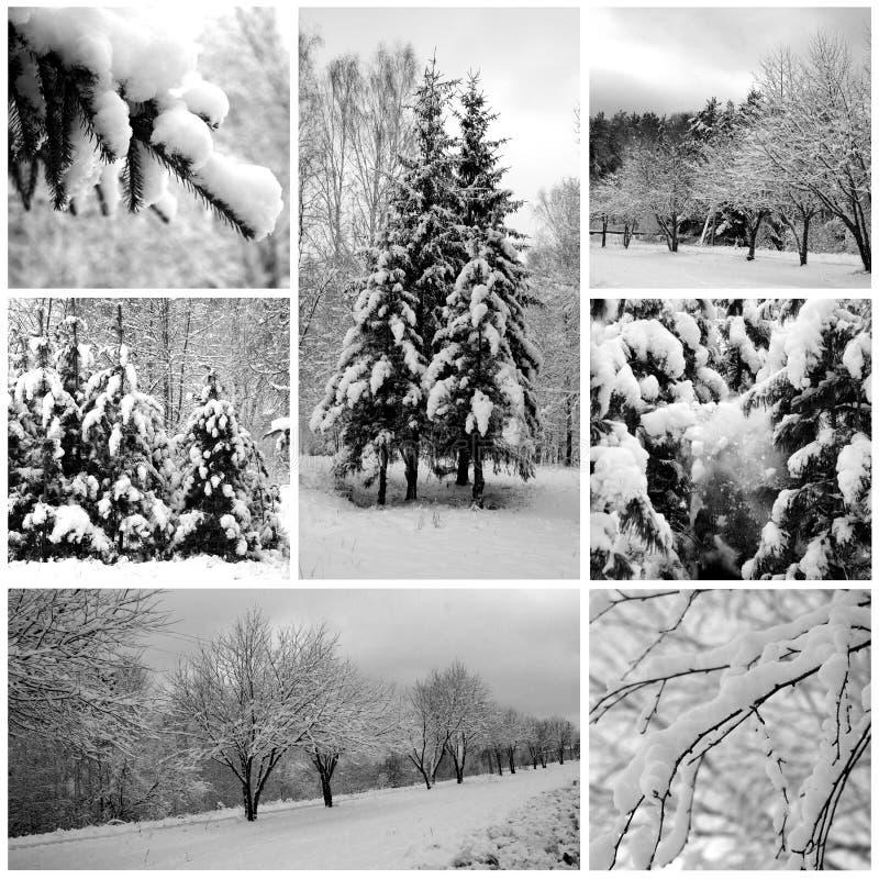 Bosque hermoso, pinos del invierno fotografía de archivo libre de regalías