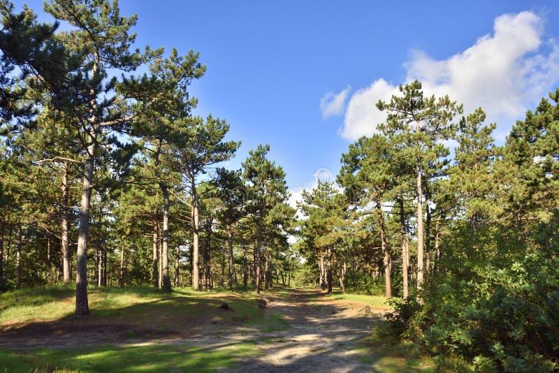 Bosque holandés de la isla foto de archivo