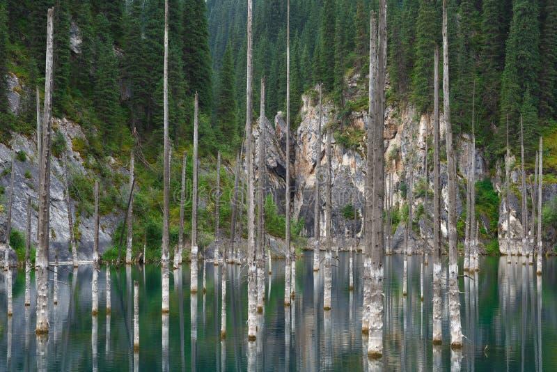Bosque hundido en las montañas imágenes de archivo libres de regalías