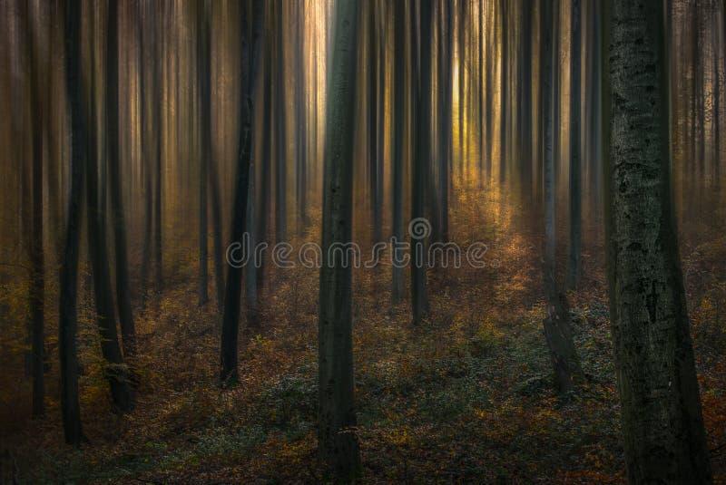 Bosque I del cuento foto de archivo libre de regalías