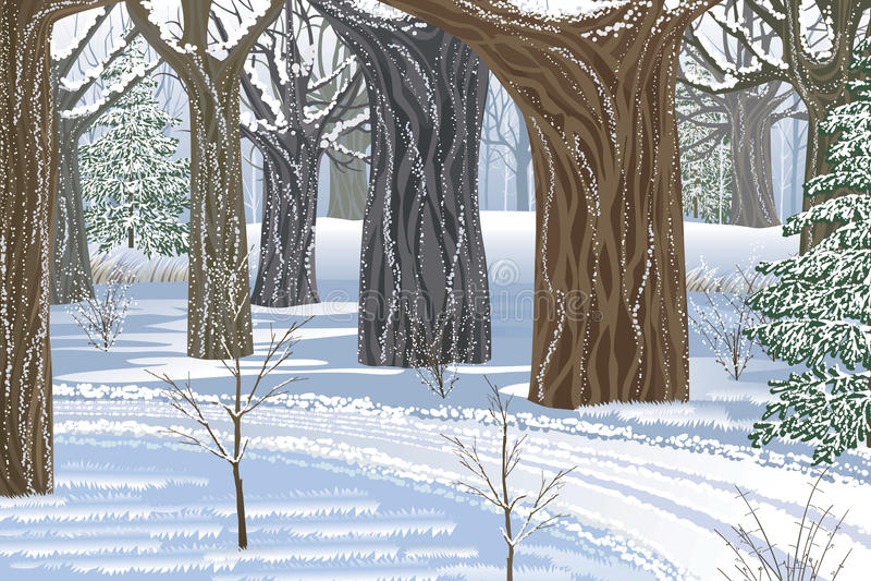 Bosque ideal del invierno ilustración del vector
