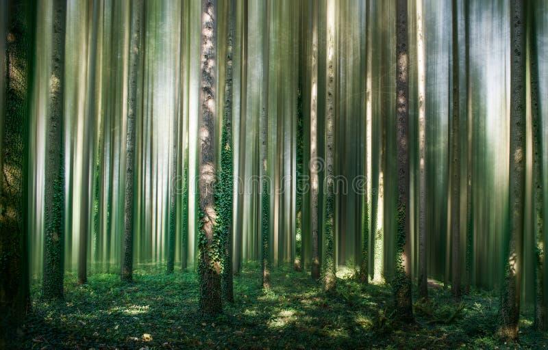 Bosque III del cuento fotografía de archivo