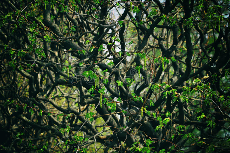 Bosque impenetrable imagen de archivo libre de regalías