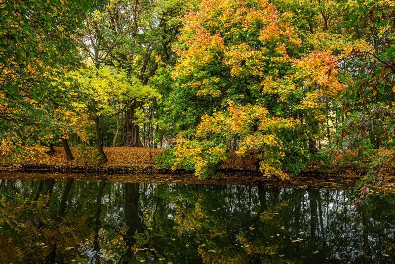 Bosque imponente y colorido en la ca?da y el r?o, Polonia fotografía de archivo