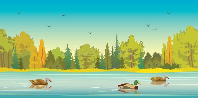 Bosque, lago y patos del otoño ilustración del vector