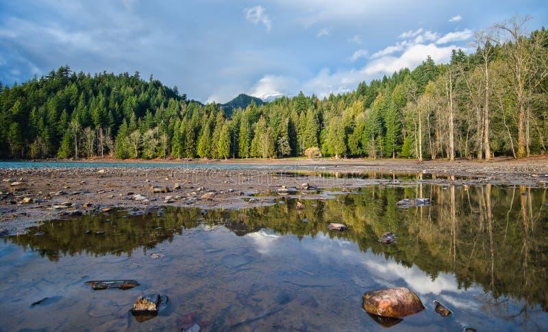 Bosque a lo largo de la orilla del lago foto de archivo