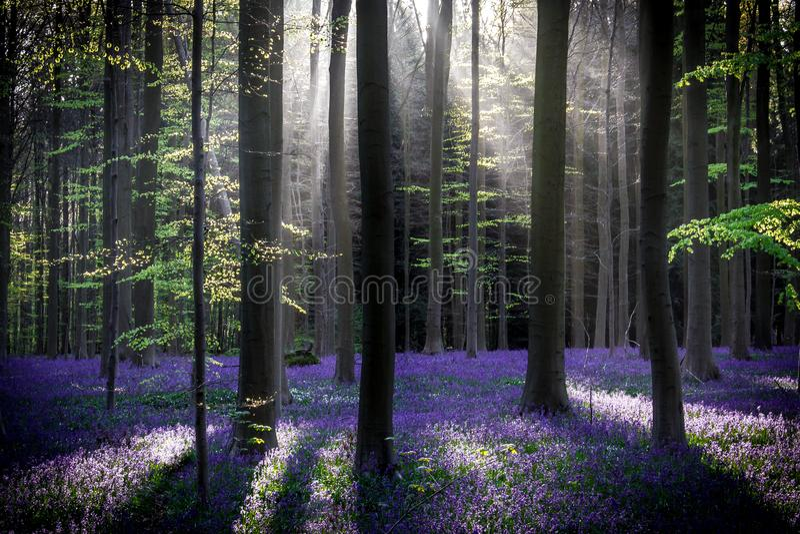Bosque mágico fotos de archivo libres de regalías
